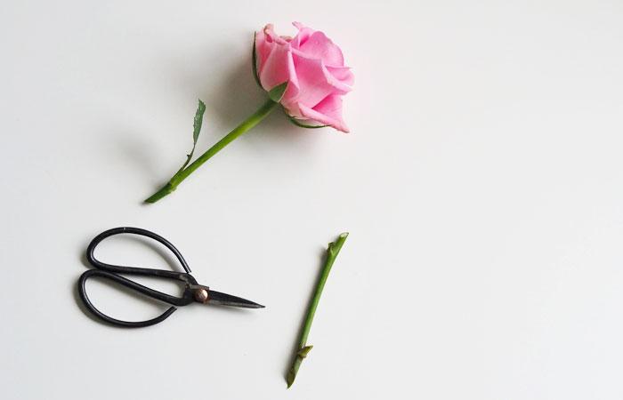 花用のハサミは清潔で切れ味のよいものを